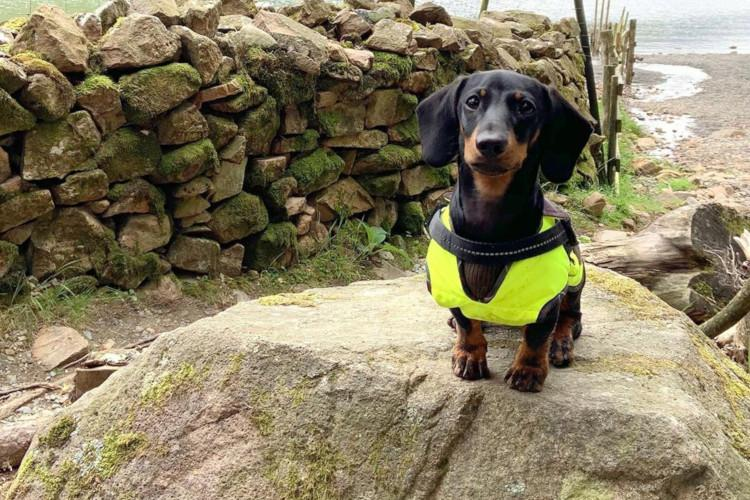 dog on rock in lake district