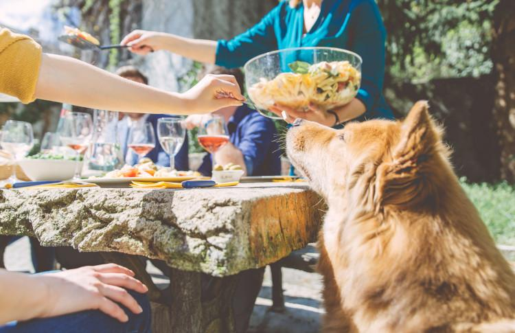 Dog and family having picnic