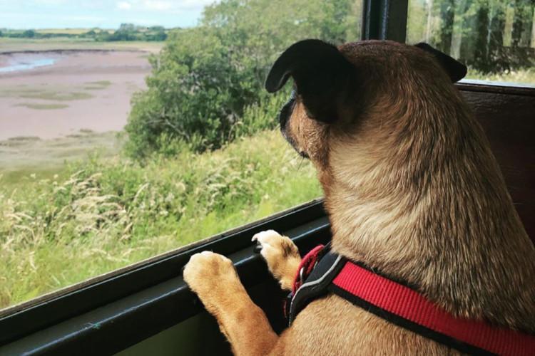 Dog aboard railway
