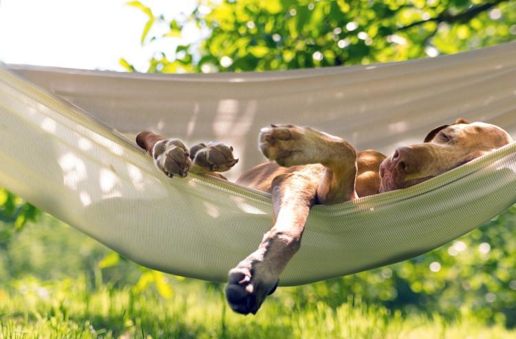 Dog relaxing in hammock