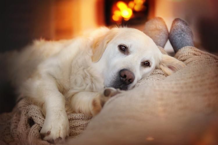 dog sleeping with owner on sofa