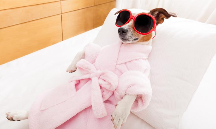 Dog having spa day