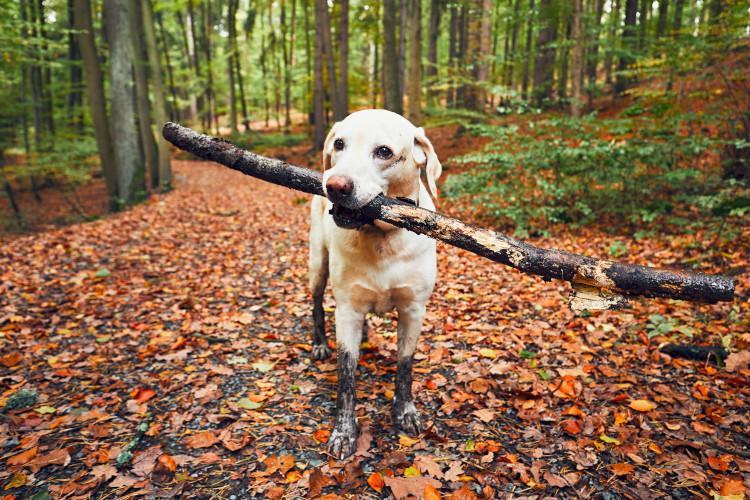 dog on autumn walk
