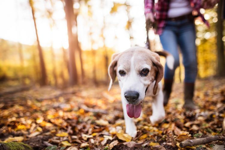 dog on autumn walk in woods