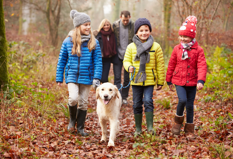 A dog and his family of owners out for a walk in the woods
