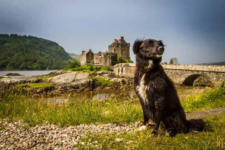 Black dog posing in front of a historic castle in the countryside