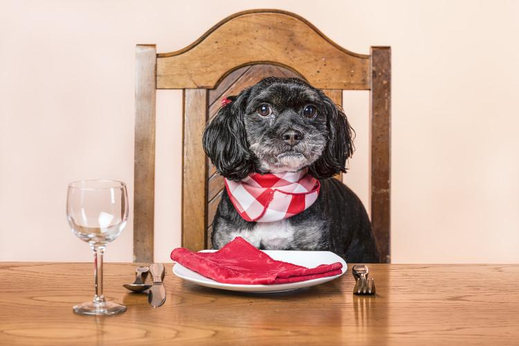 Dog sat at the table with a plate, napkin, glass and cutlery waiting for food