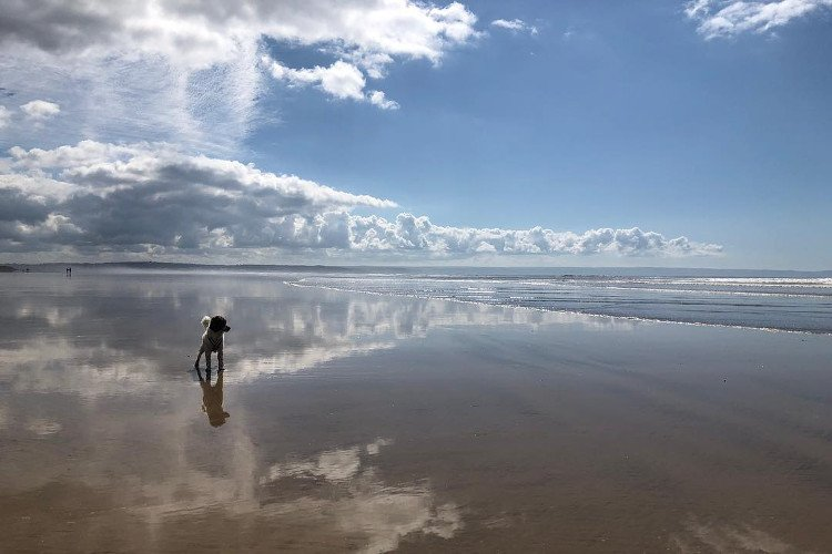 Saunton Sands for dogs