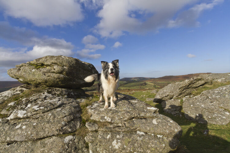 Dog at Dartmoor National Park