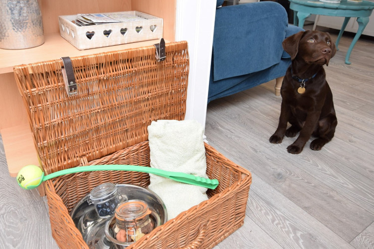 Dog enjoying treats from the welcome hamper at dog-friendly cottage Waves at Pevensey Bay