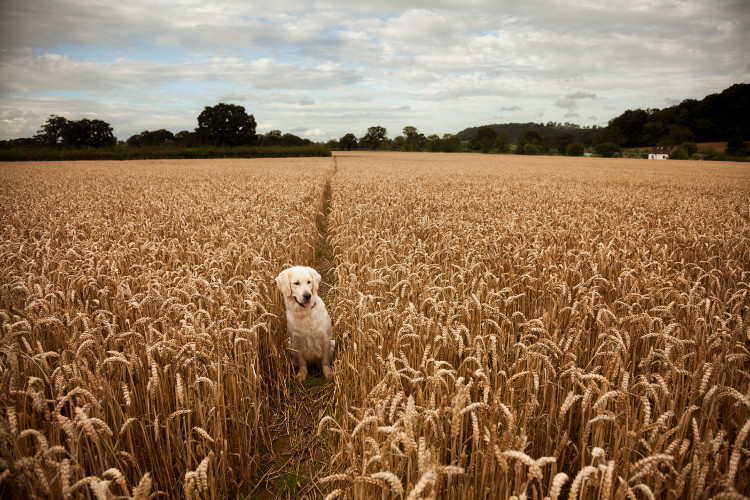 dog in the Somerset countryside