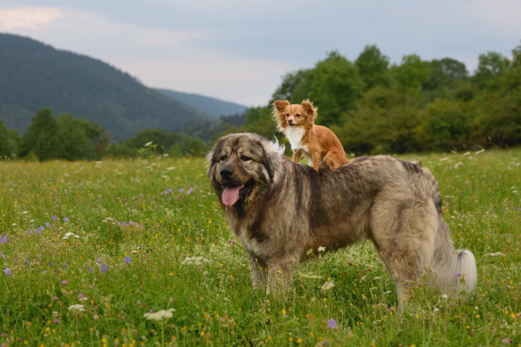 Perfect holiday destinations for dogs