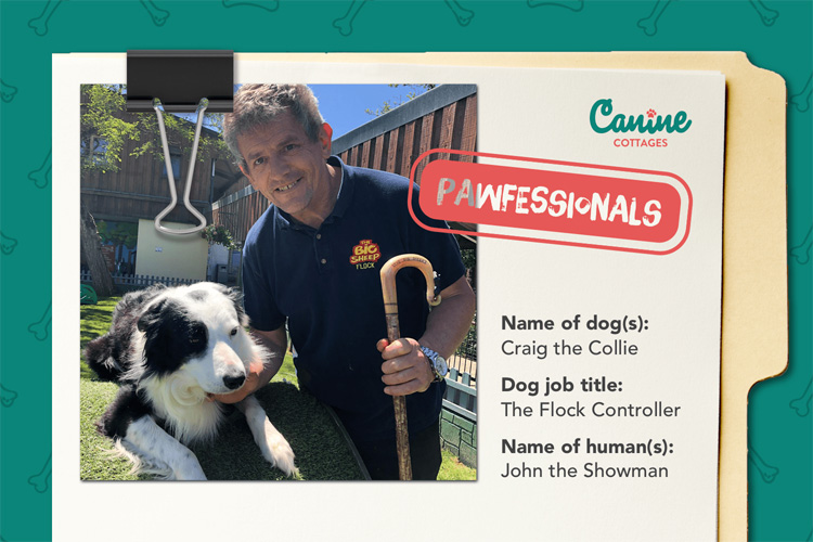 The Pawfessionals: A day in the life of Craig the collie