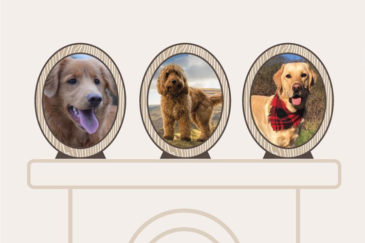 Meet our Canine Critic top ten!