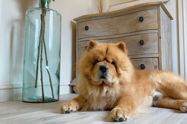 The Cottage at Hall Farm House review by Barney: South East Canine Critic