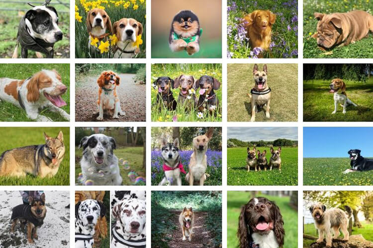 The best of the rest: Canine Critics runners-up 2019