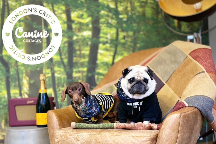 The Cider Barn review by Puggy and Pops: London Canine Critics 2019