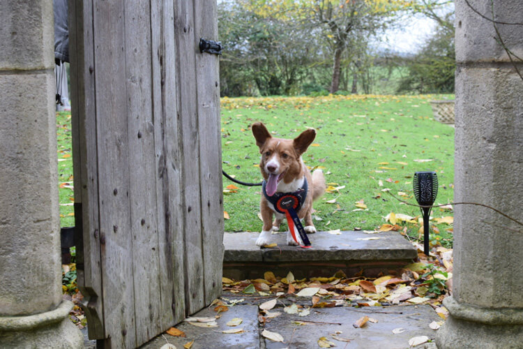 Clearbrook Barn review by Dilbert: East of England Canine Critic 2019