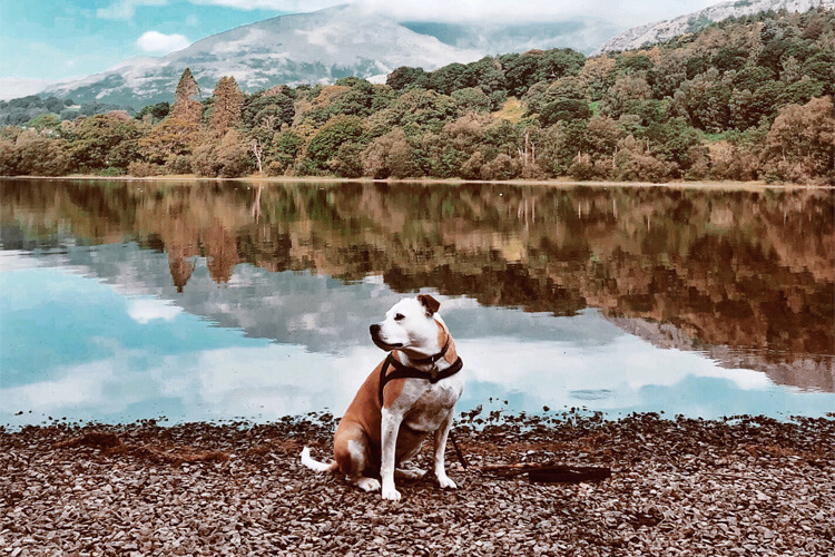 Meet our South West Canine Critic