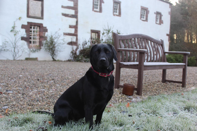 North Lodge review by Maggie: Scotland Canine Critic 2019
