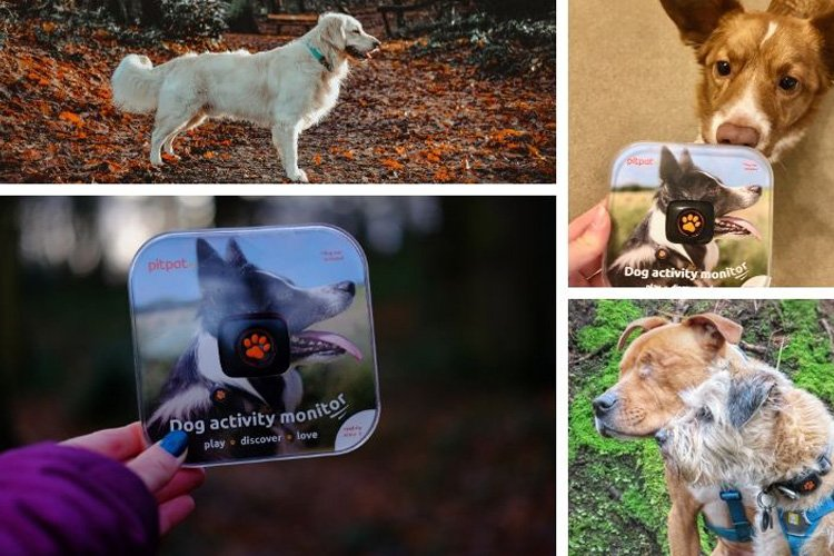 PitPat dog activity monitor: Canine Critics review