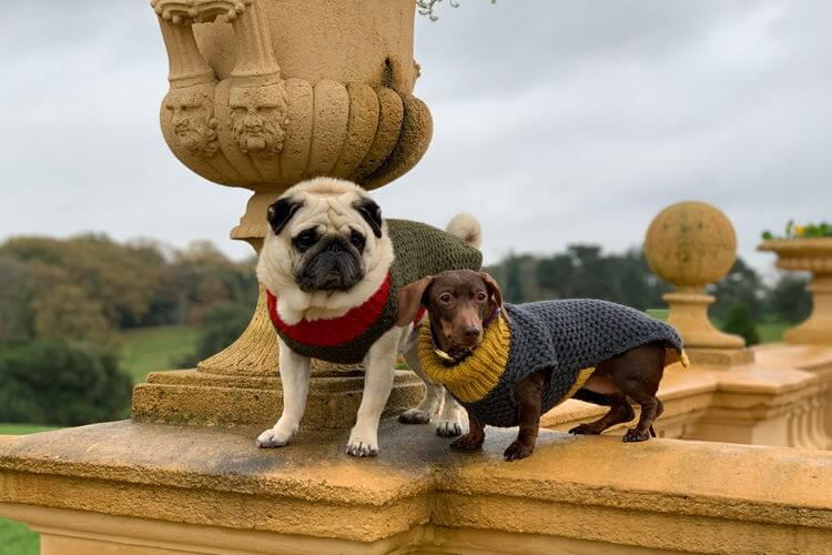 Greystone Cottage review by Puggy Smalls and Pops: London Canine Critics 2019