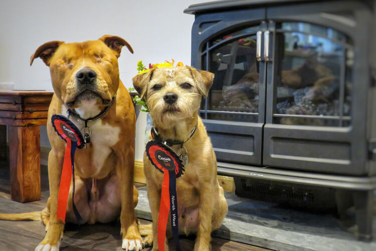The Little Small House review by Toby and Amos: North West Canine Critics