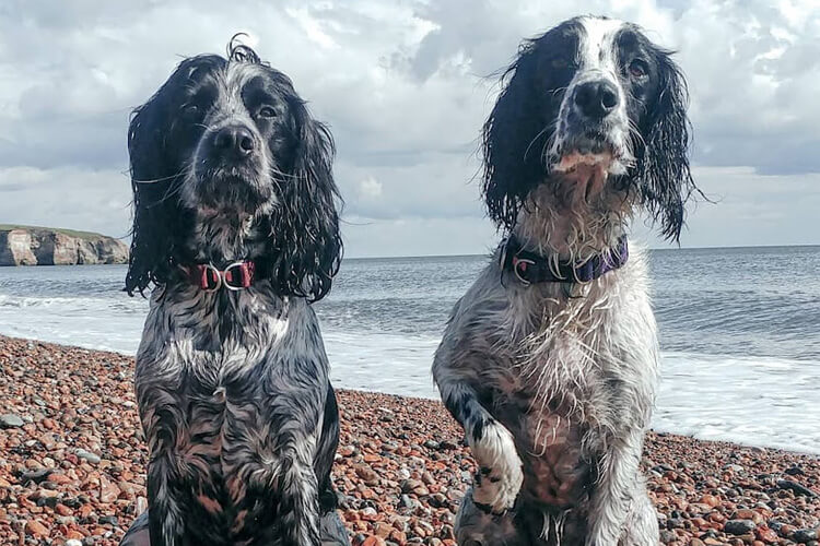Meet our North East Canine Critics