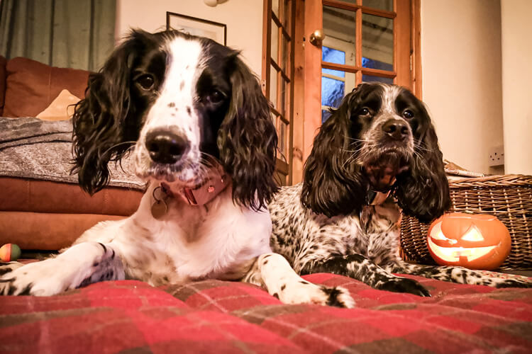 Old Barn review by Willow & Bobby: North East Canine Critics 2019