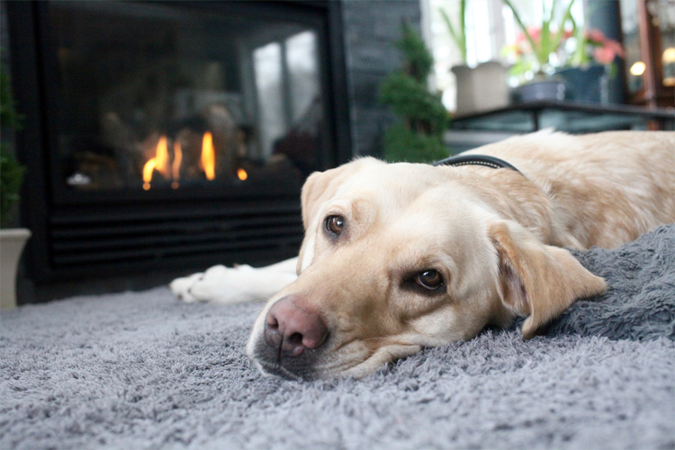 What to do if your dog is scared of fireworks