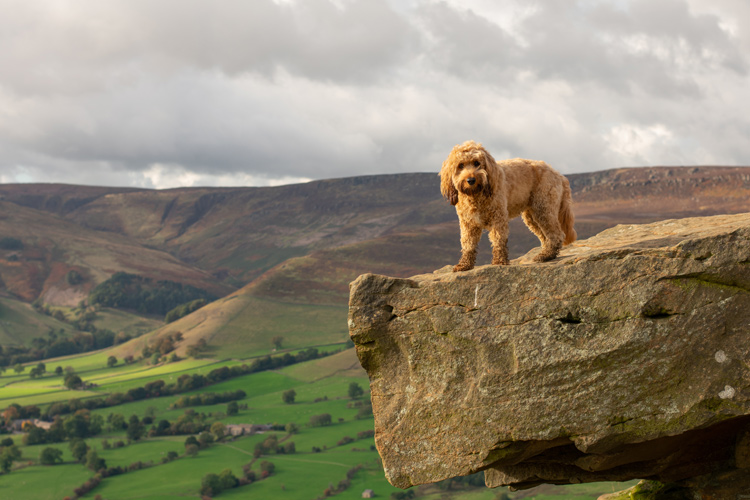 Poppy's first ever trip to the Peak District