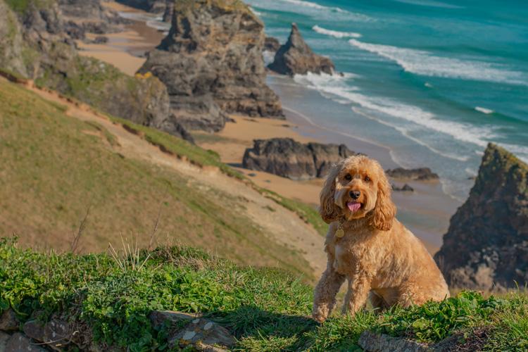 Poppy's coastal holiday in Cornwall
