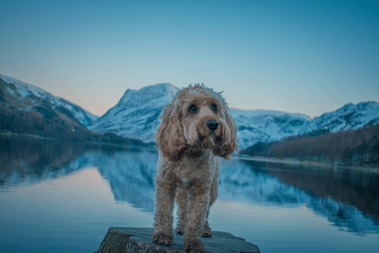 Poppy's snowy adventure to the Lake District