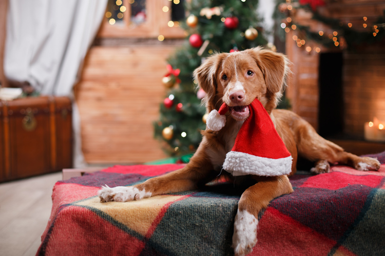 A dog-friendly Christmas