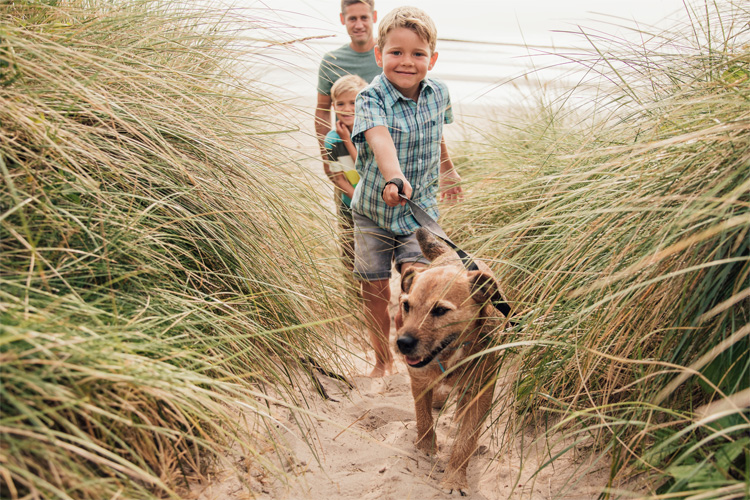 Top tips for keeping your dog calm on holiday
