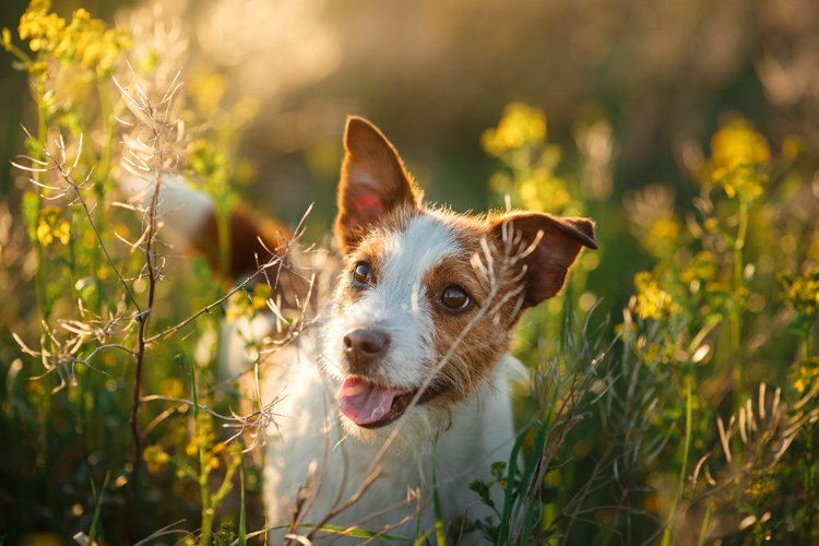 Simple ways to keep your dog safe this spring