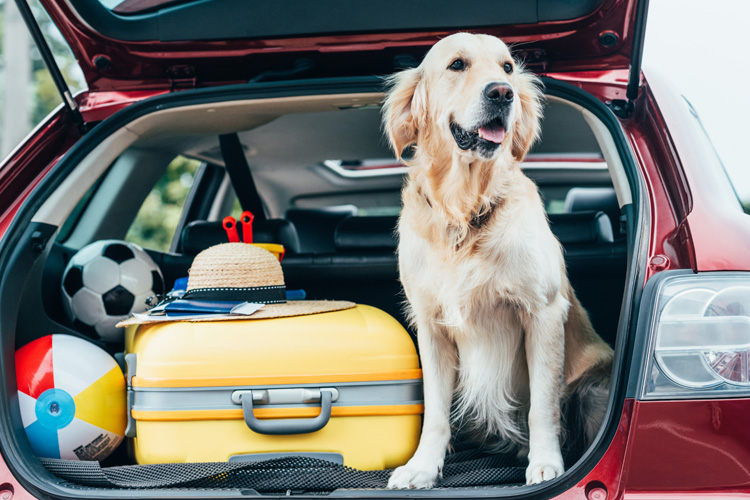 10 best travel tips for dogs