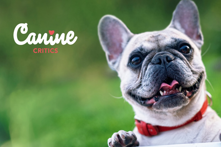 What makes a great Canine Critic?