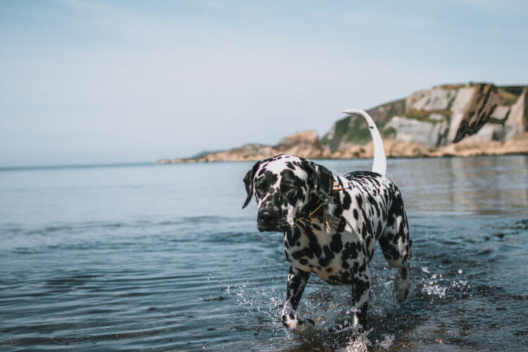 Our guide to UK dog-friendly locations