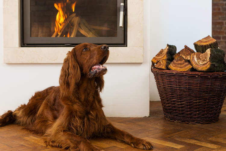 The best dog-friendly properties for 2021