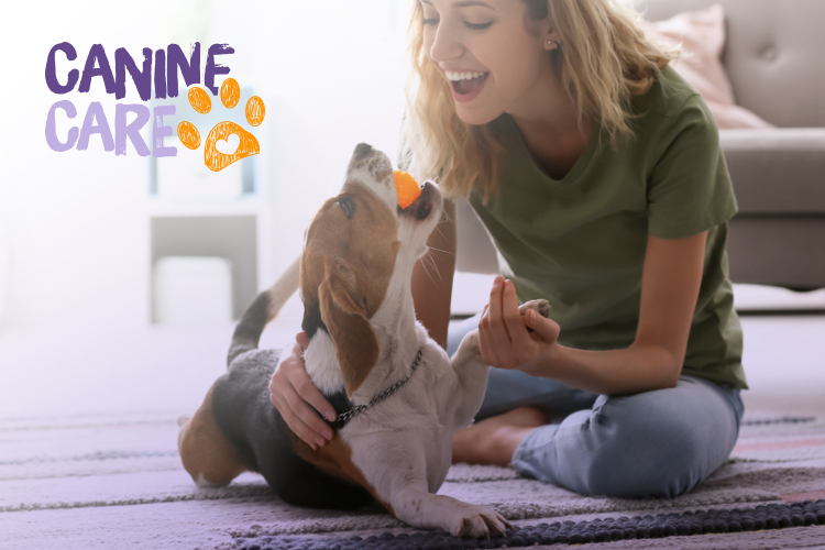 Introducing Canine Care: helping you to have a happy hound