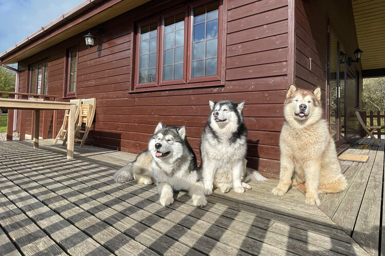 Sky Lark Lodge review by Phil, Niko and Teddy: Canine Critics 2020