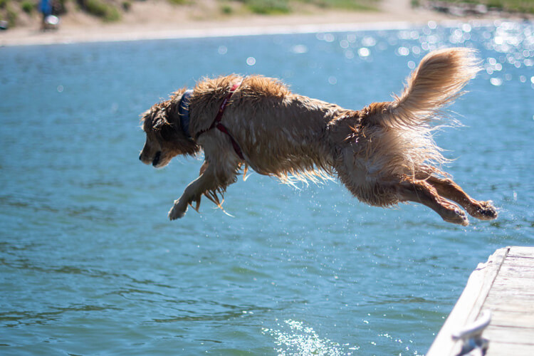 10 of the best dog products for summer 2021