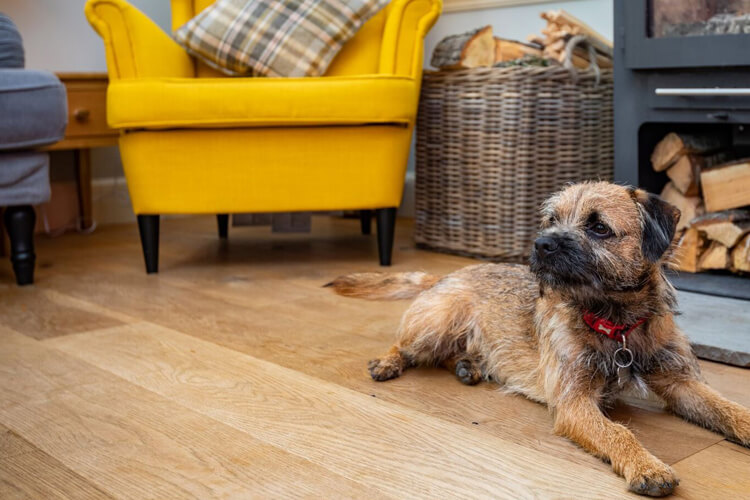 What to look for when booking your dog-friendly cottage