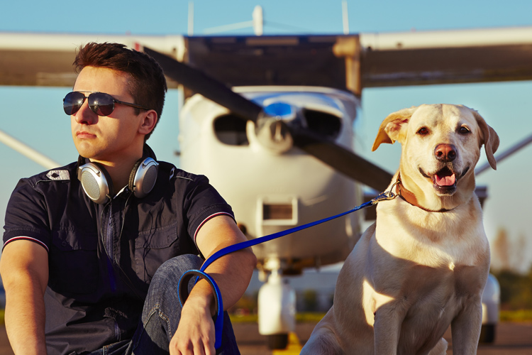 Planes, trains and automobiles with your dog