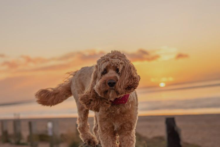 Poppy explores the beautiful Norfolk coast