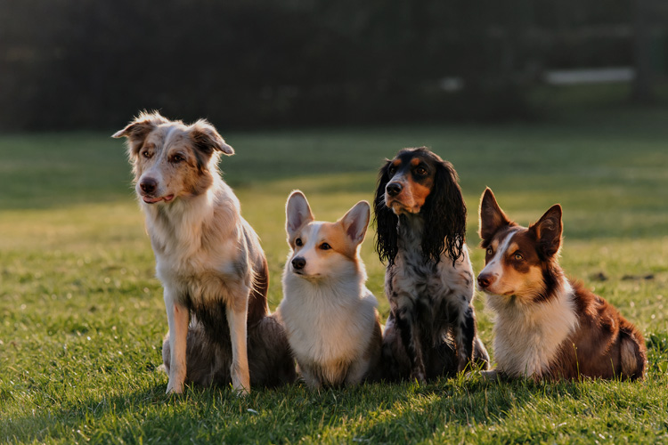 Our Canine Club Partners