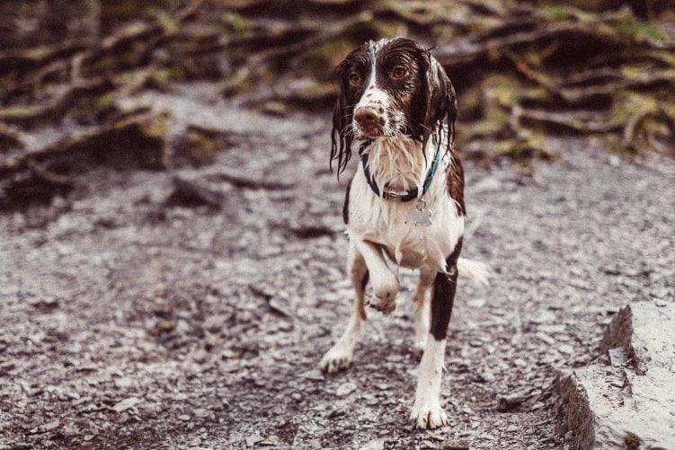 The UK's cutest wet dogs revealed