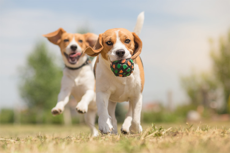 Top dog holidays