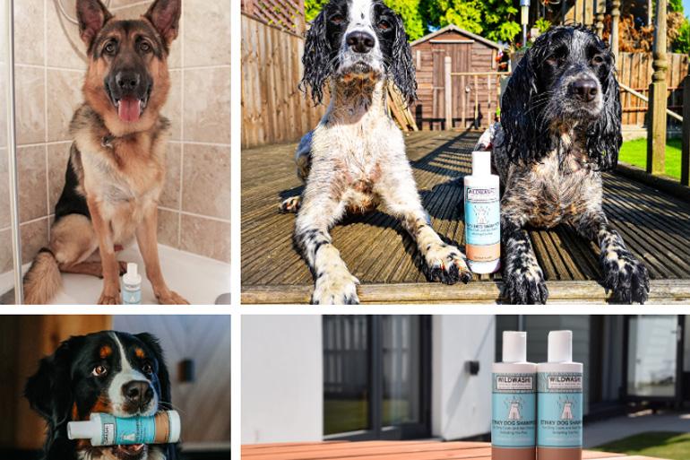 Wildwash dog shampoo: Canine Critics review